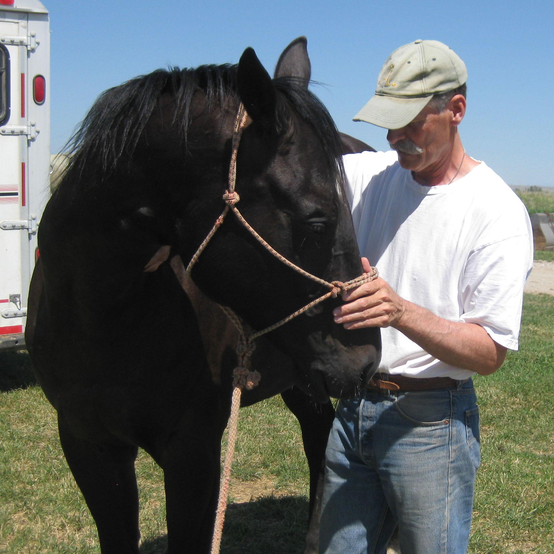 lee-lofgren-equine-and-canine-chiropractic-care-work-3
