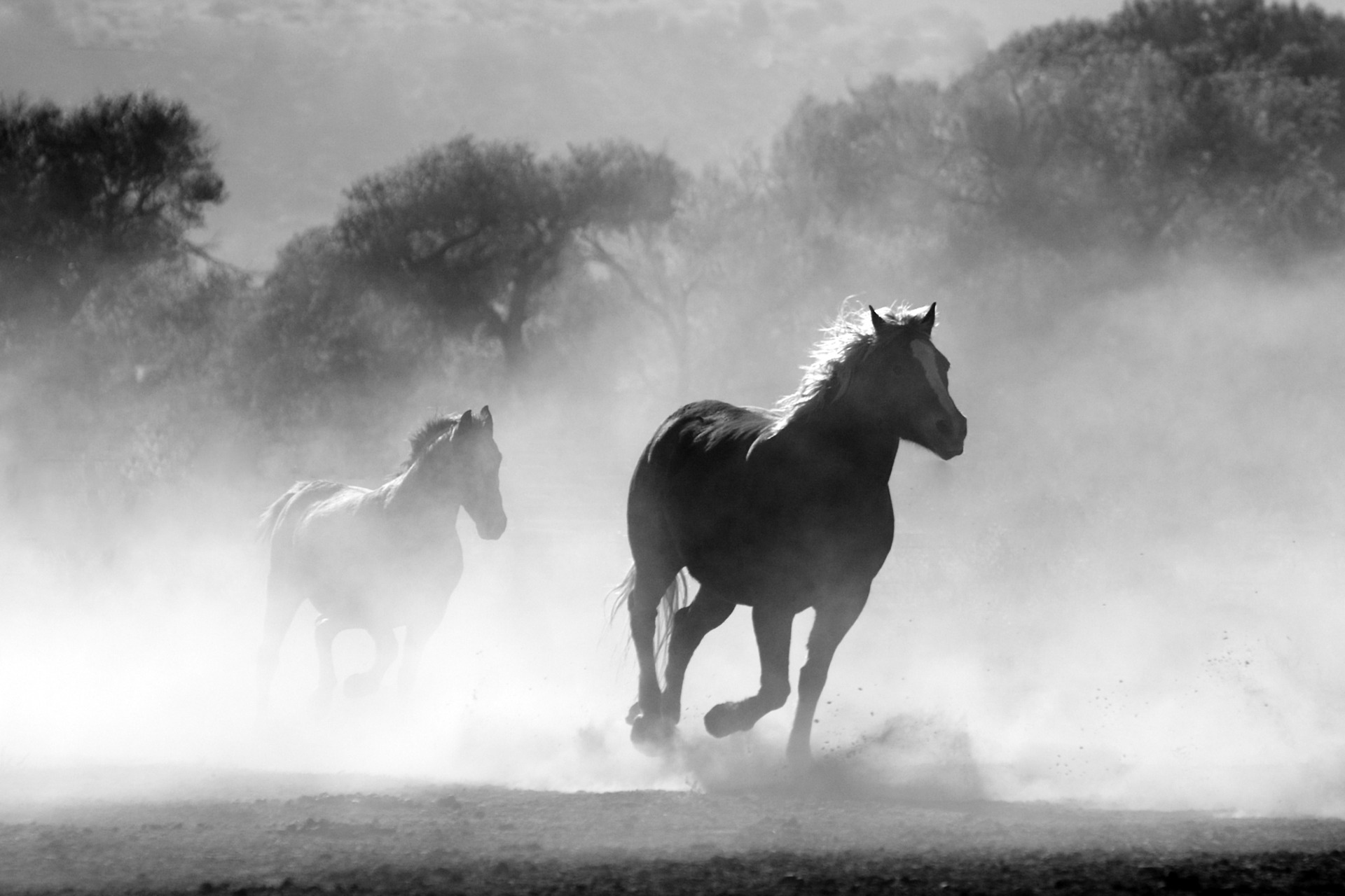two-horses-running